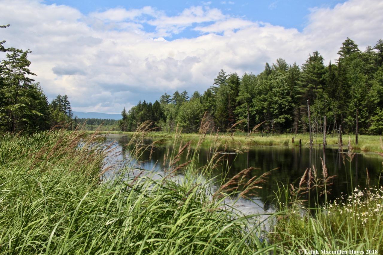 e-summer evergreens