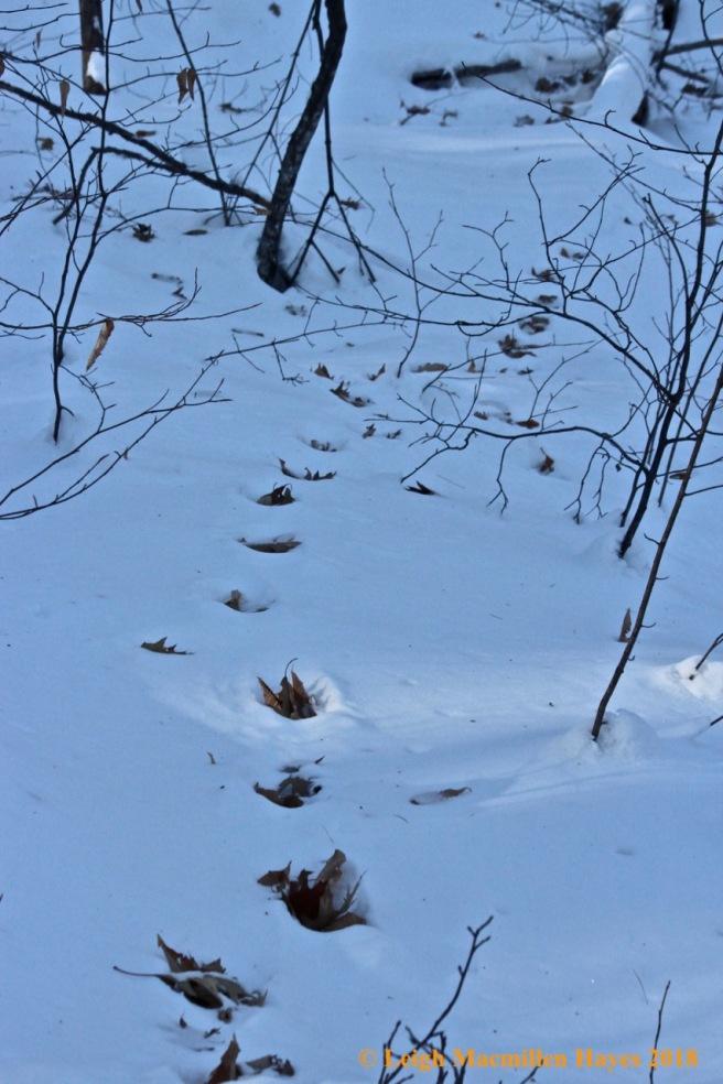 f-deer trail