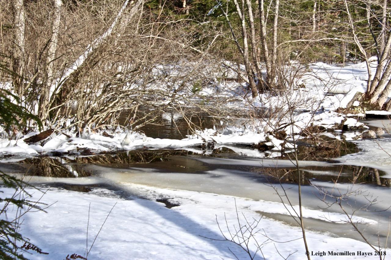 h12-beaver dam