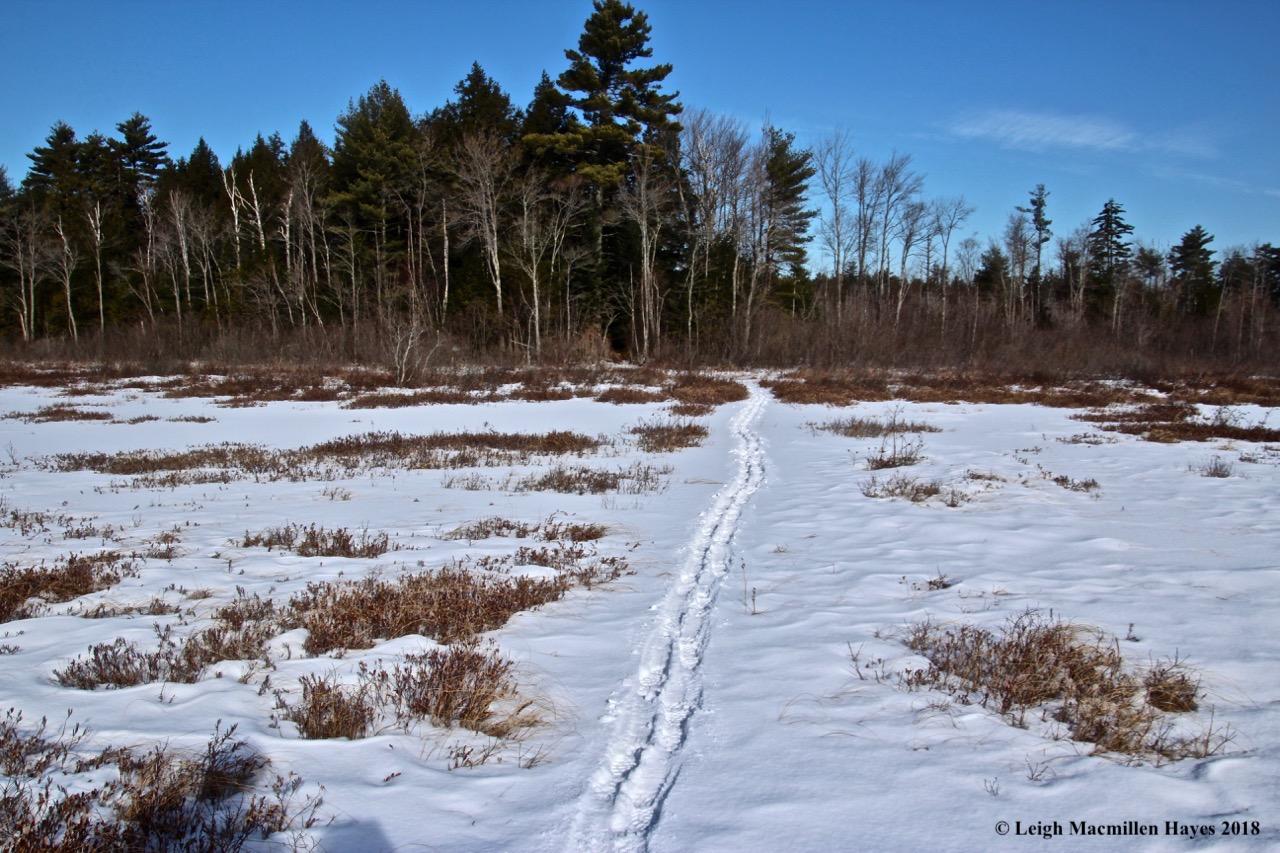 h3-quaking bog