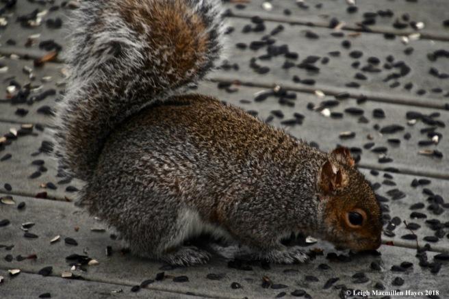j2-squirrel feast