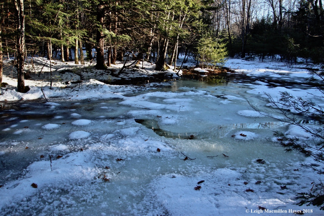 j21-second vernal pool