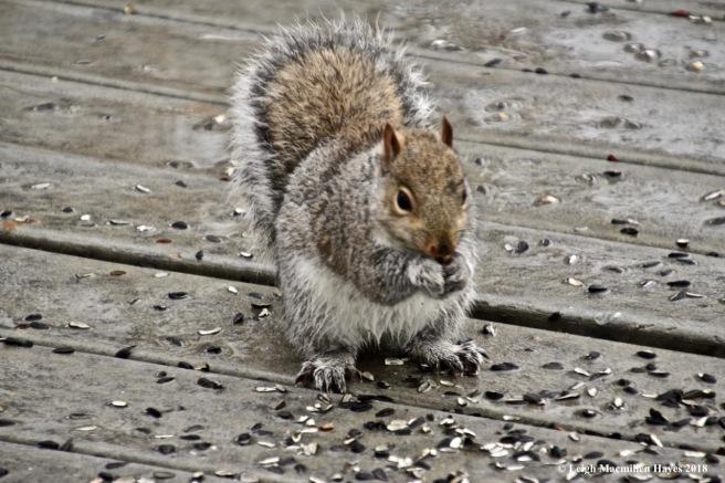 j3-squirrel feast 2