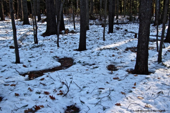 j4-snow thaw and debris