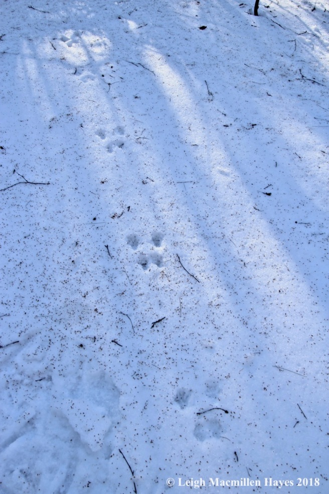 j8-squirrel tracks