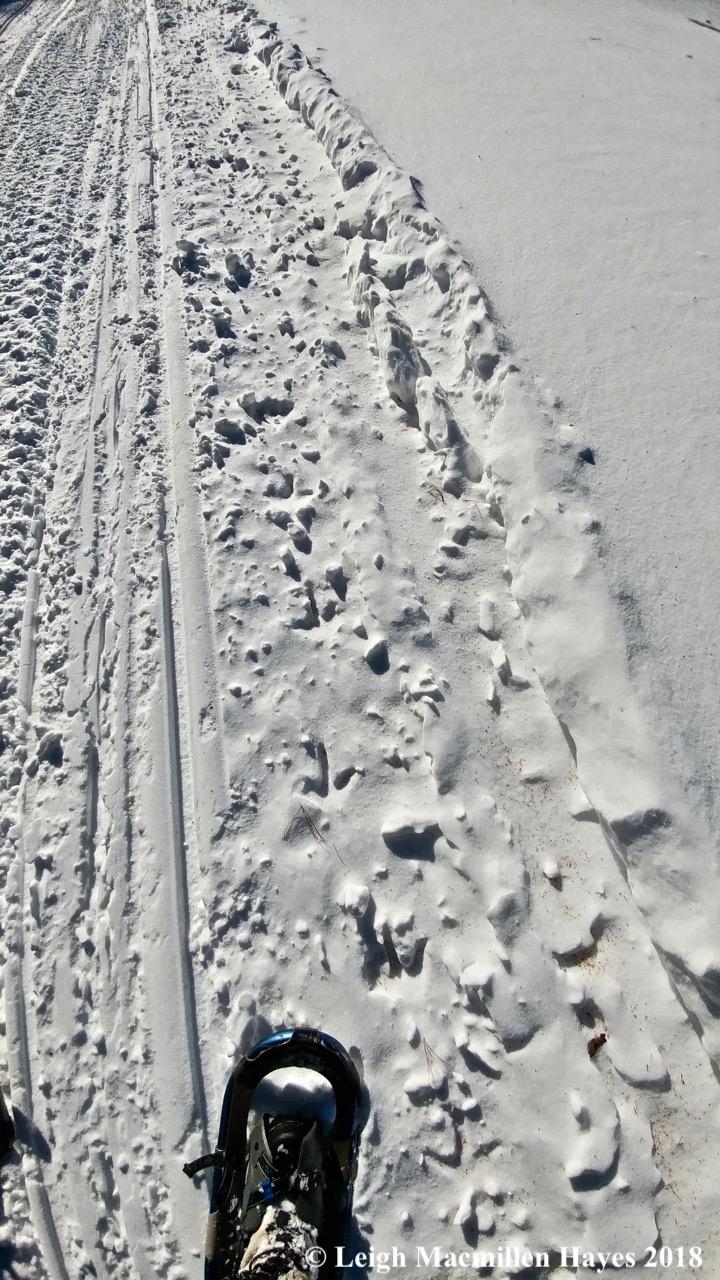 r17-turkey tracks