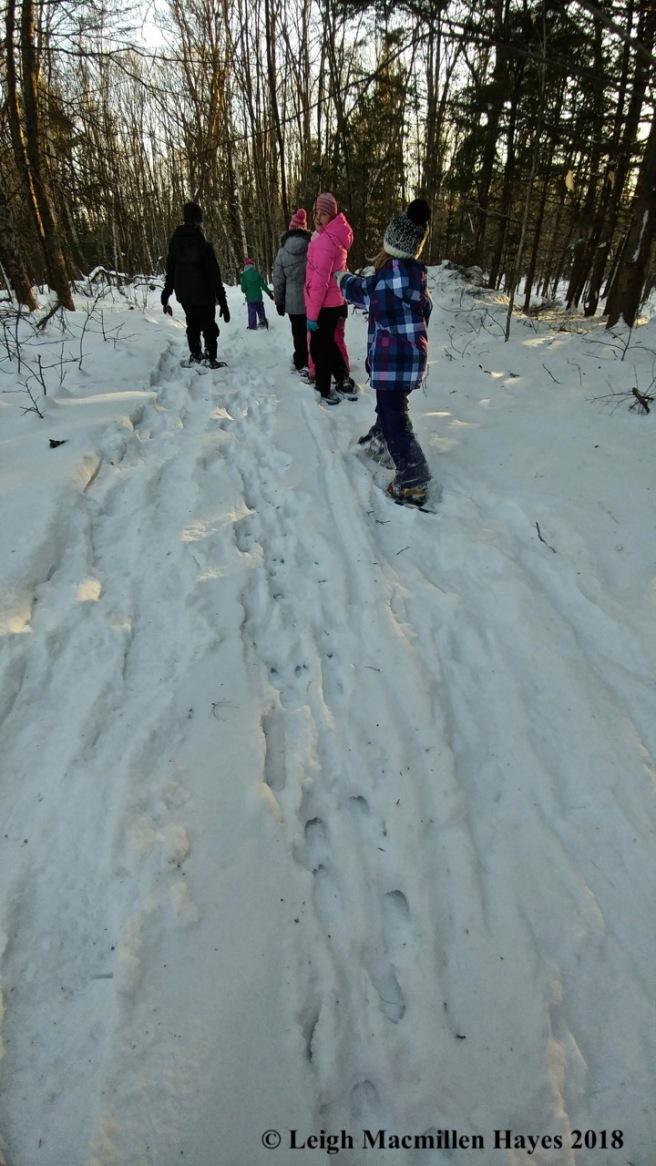 r23-walking beside deer tracks