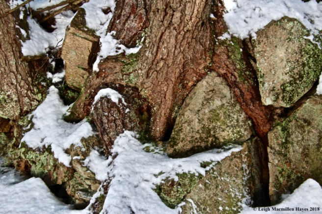 a7-hemlock and rocks