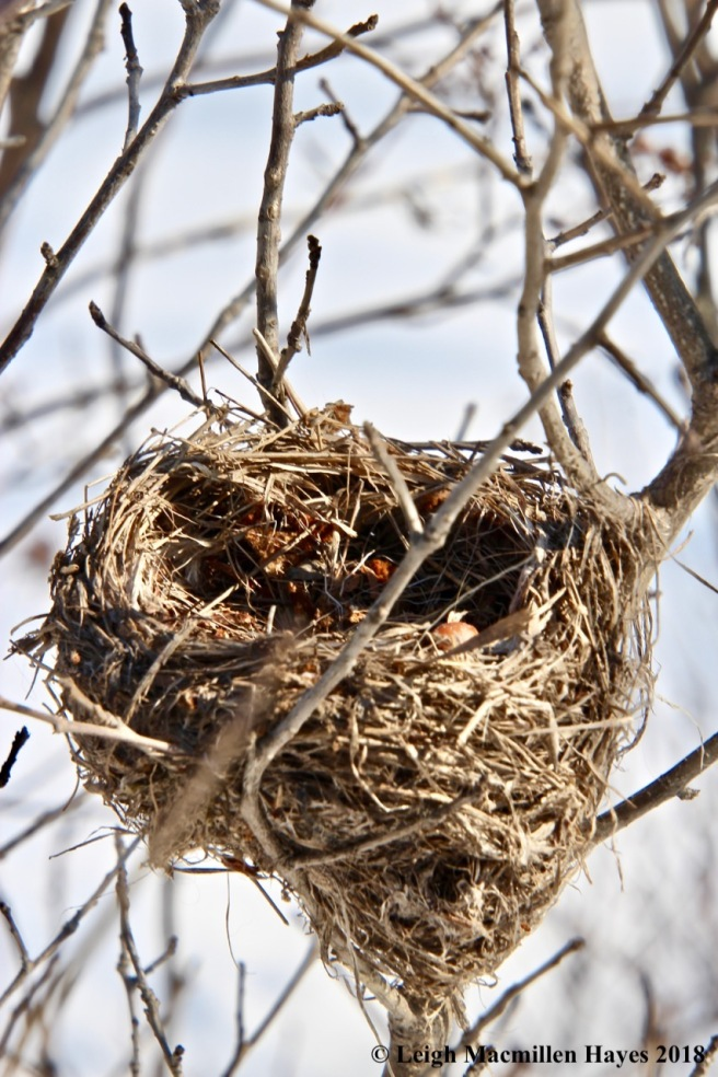 b7-bird's nest