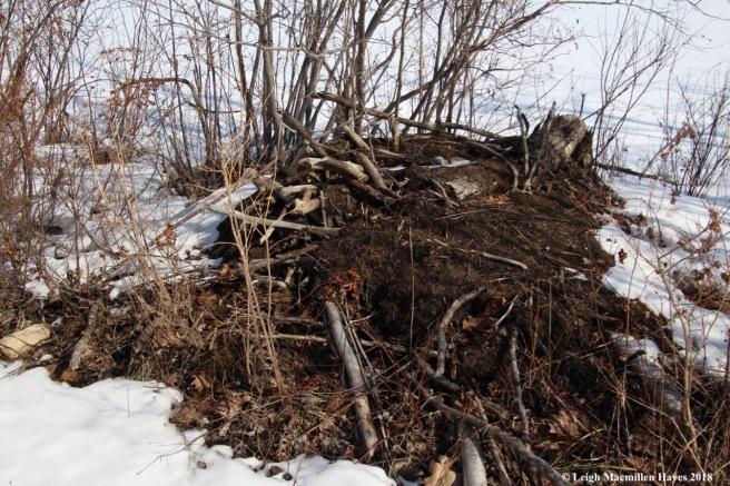b8-beaver lodge