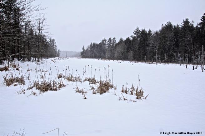 l-Long Meadow Brook 1