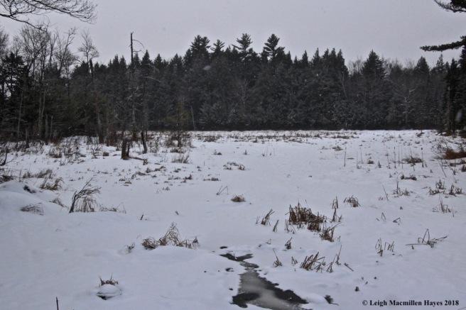 l-Long Meadow Brook south