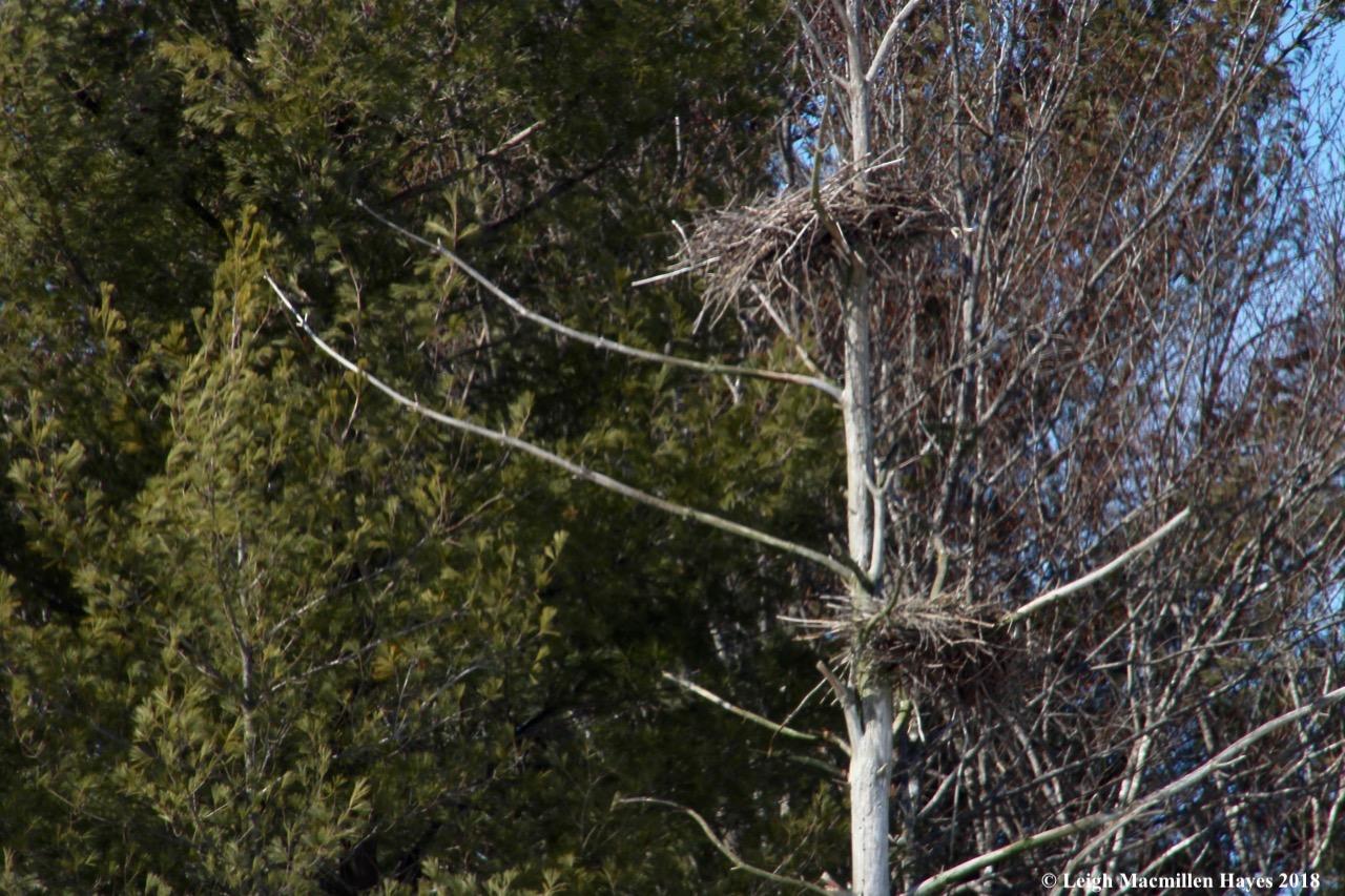 m14-heron rookery