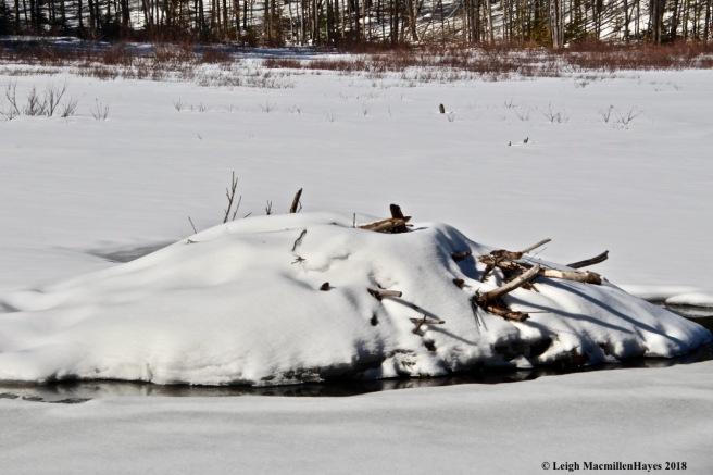 m25-beaver lodge 2