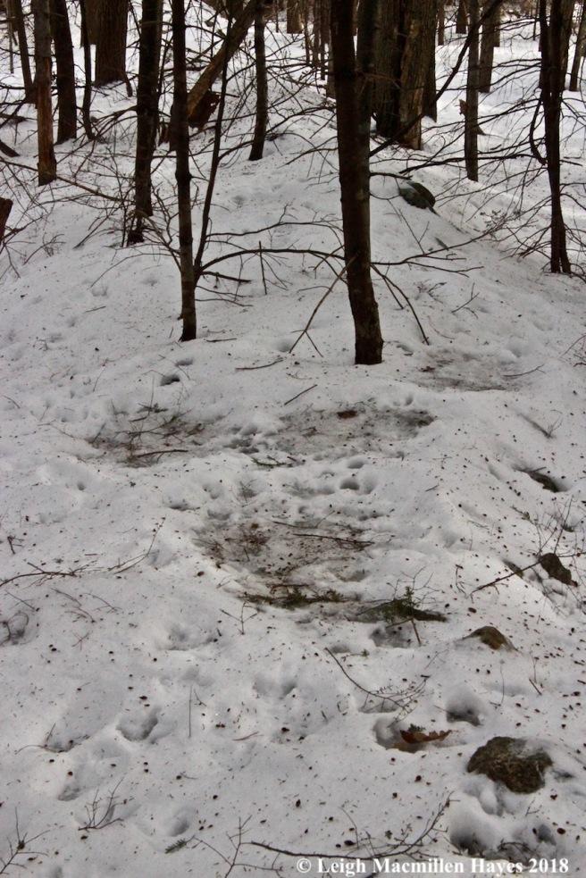 p-deer beds 1