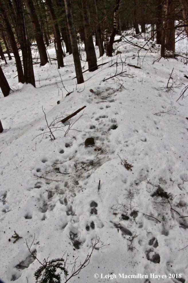 p-deer beds 2