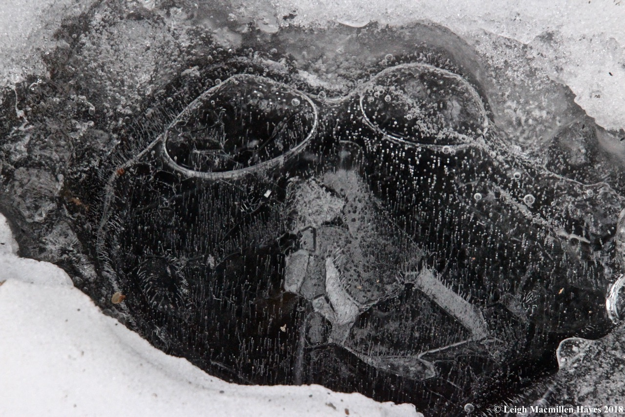 p-spectacles on ice