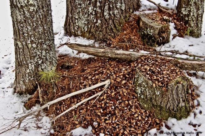 p-squirrel cache:midden