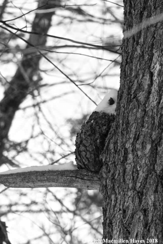 p14-Owl?