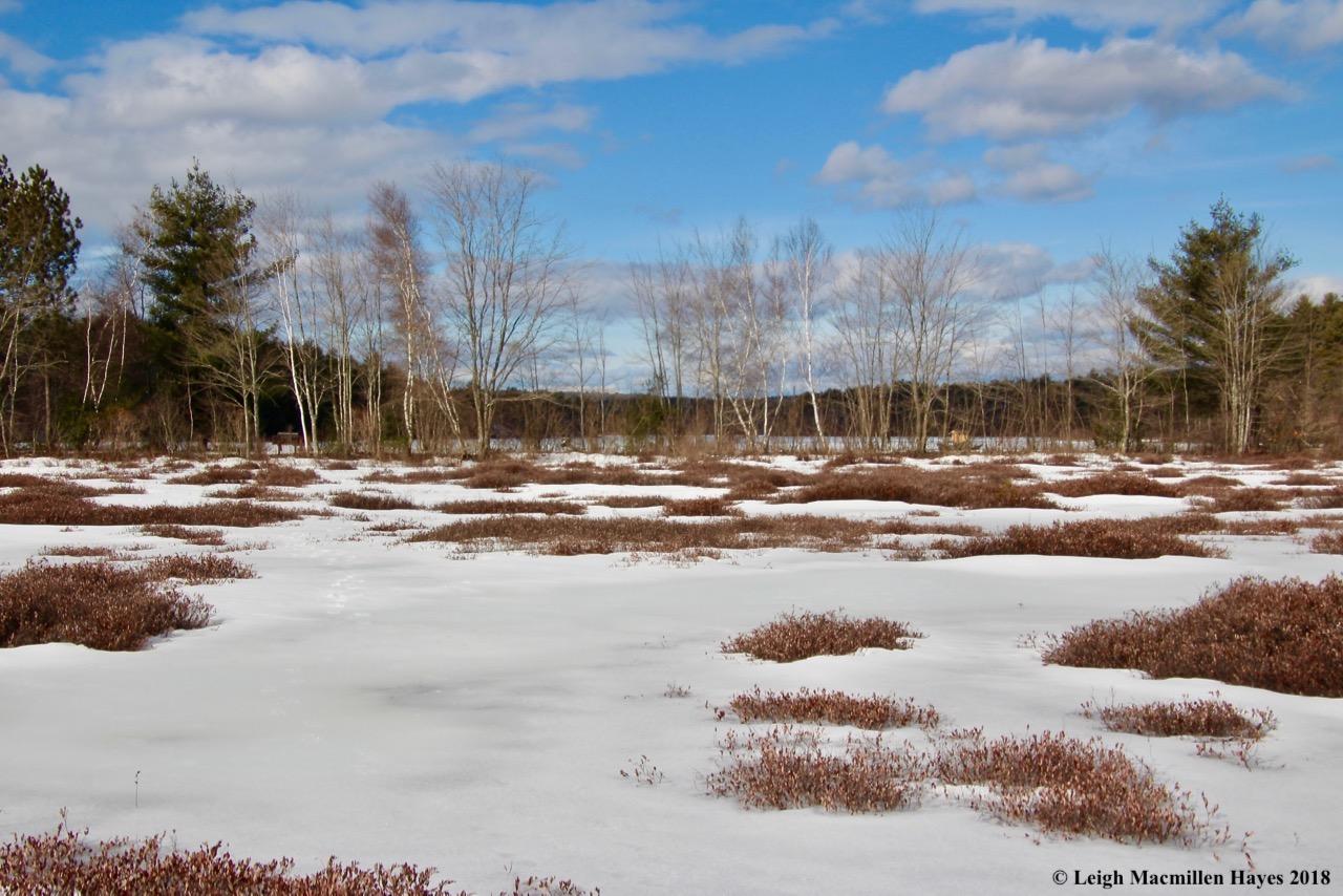 r2-wetland and pond beyond