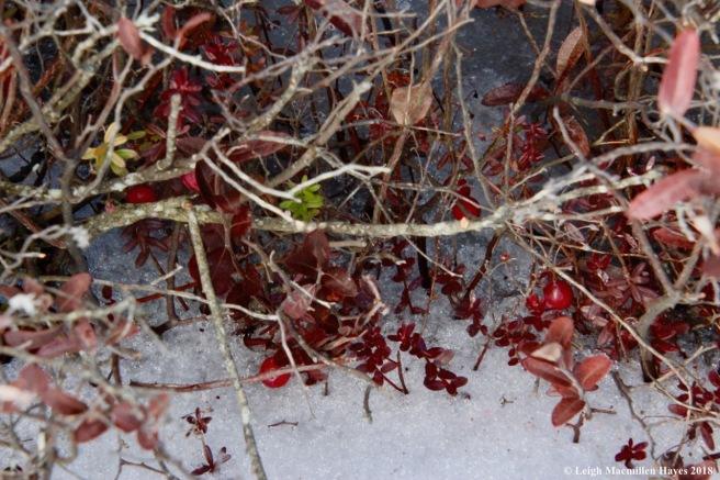 r4-cranberries