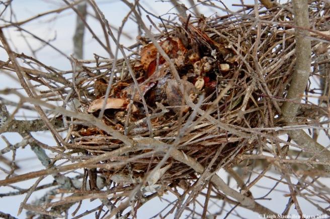 r5-bird nest