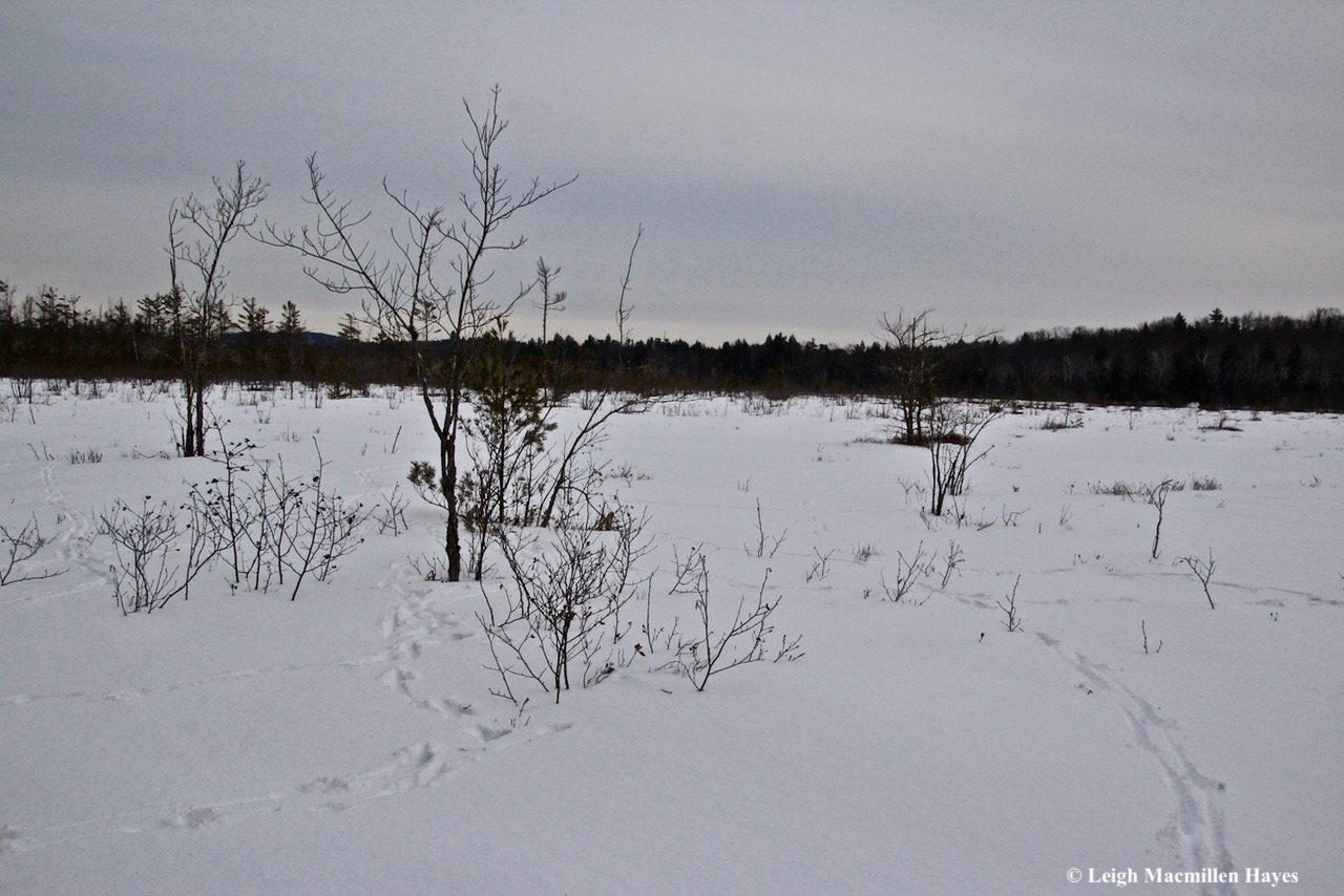 s2-the bog and deer tracks