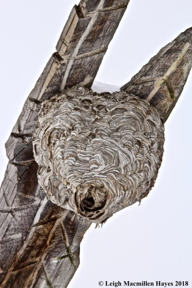 s8-hornet's nest