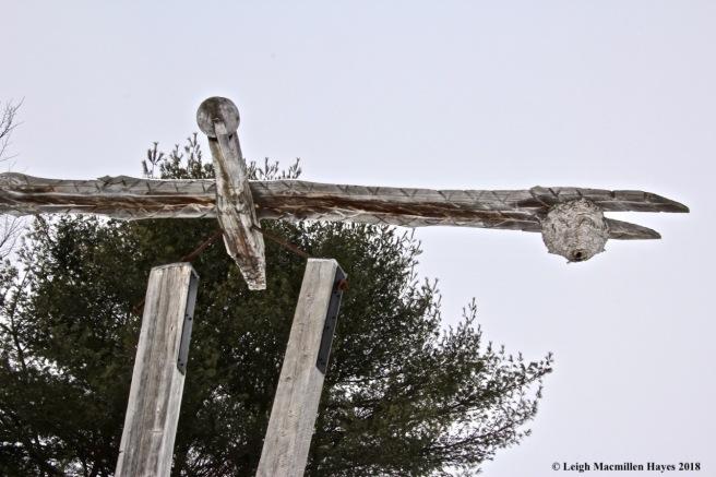 s9-hornest nest in flight
