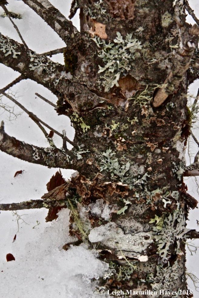 w-lichen garden1