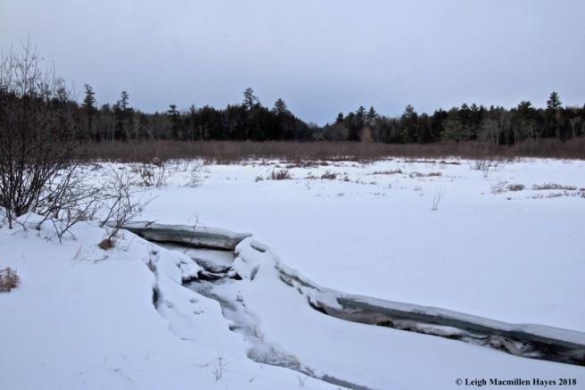 w-Robie Meadow 3