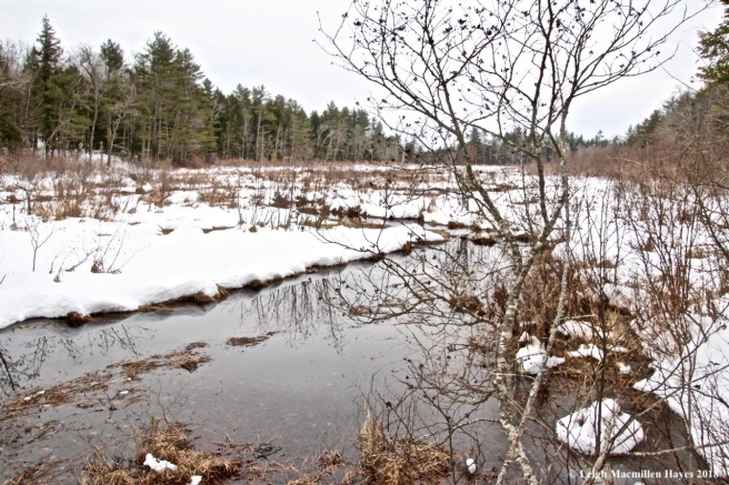 w-Wilson Wing Moose Pond Bog