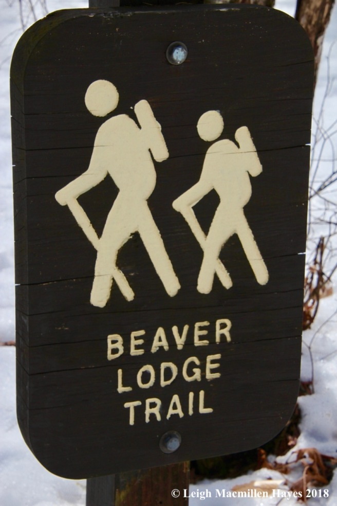 b19-beaver lodge trail