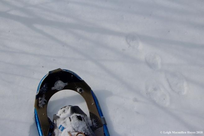 c2-snowshoes