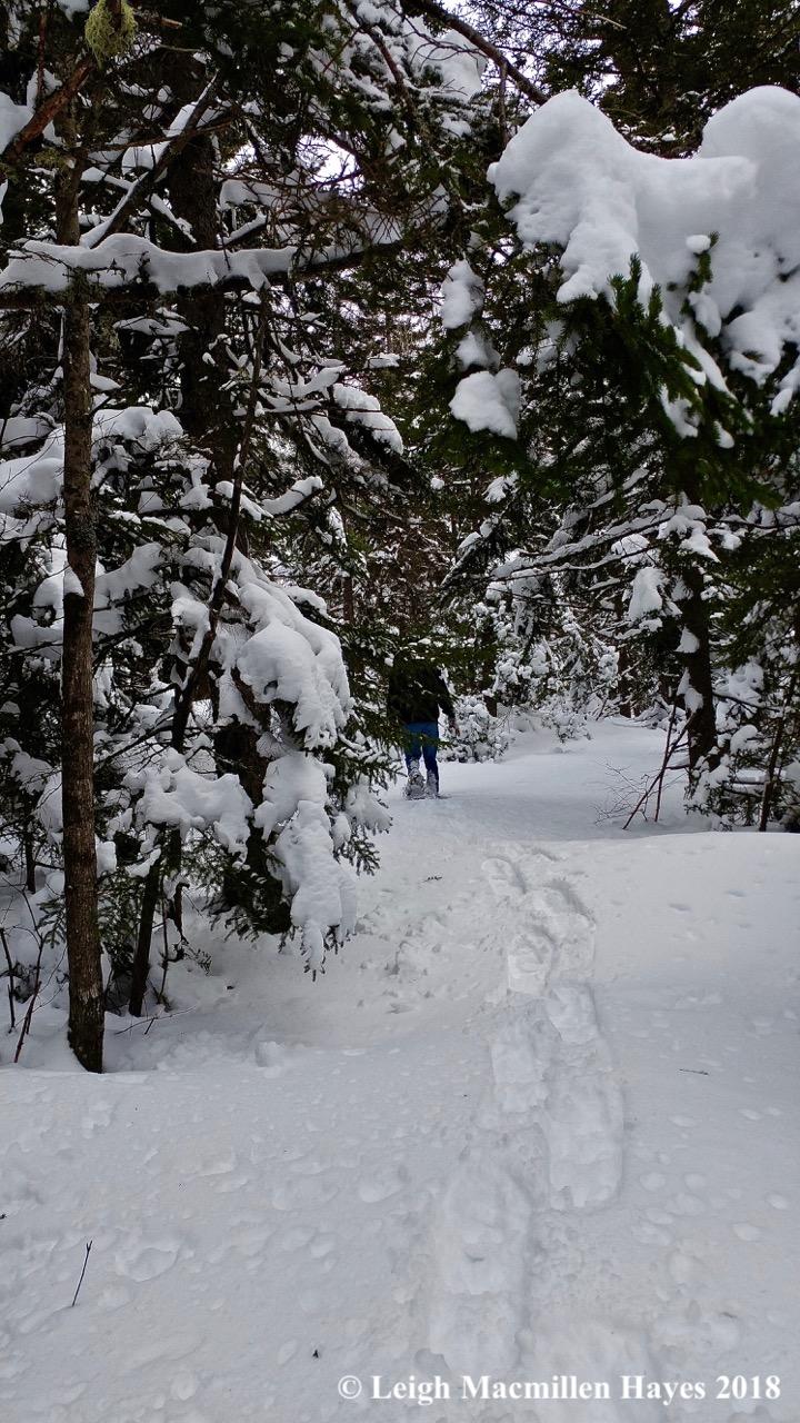 l18-winter wonderland