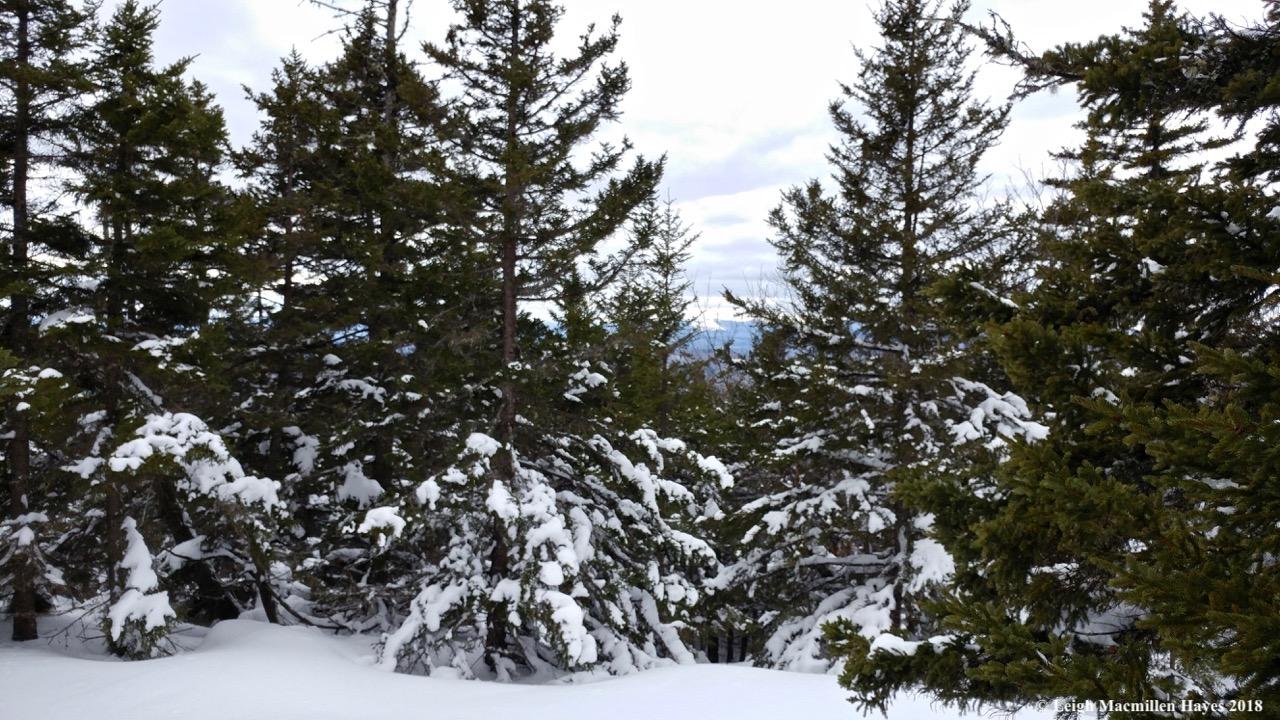 l19-summit view