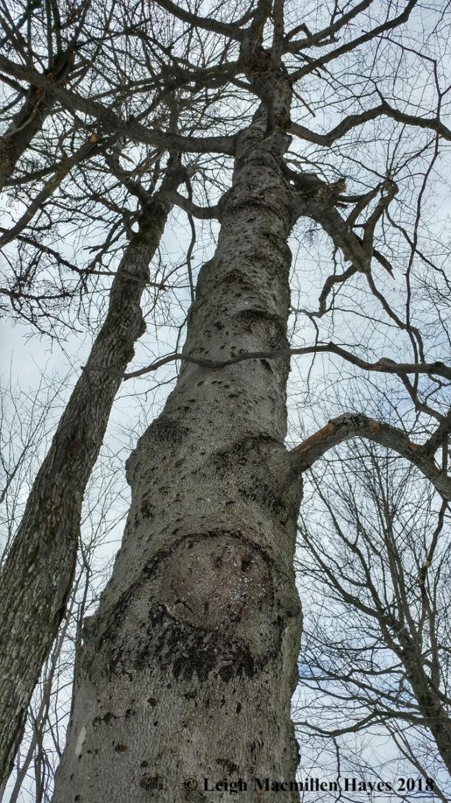 l27-bear tree 2