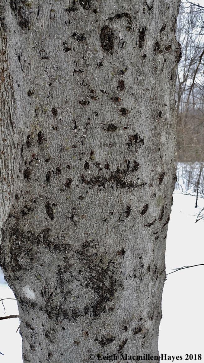 l28-bear tree 3