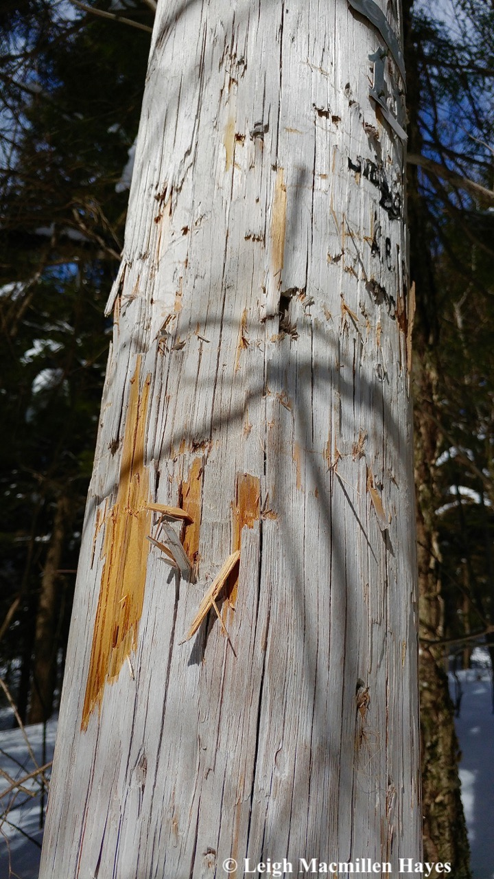 l4-bear pole