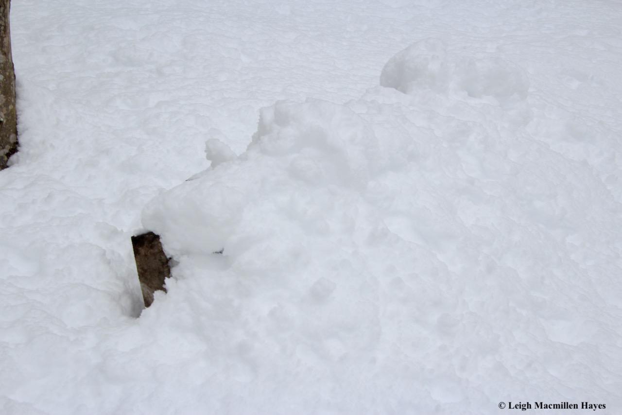 p-snow on bench