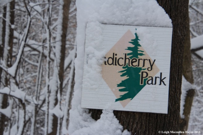 p-snow on park sign