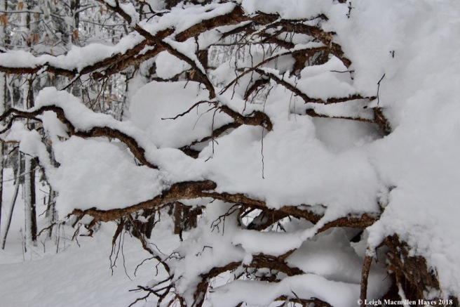 p-snow on roots