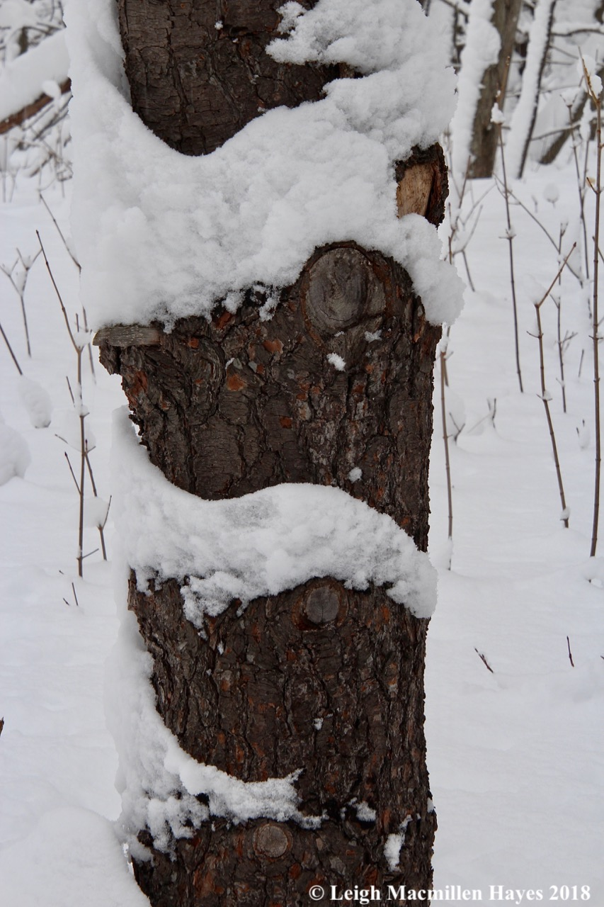 p-snow on tree trunk