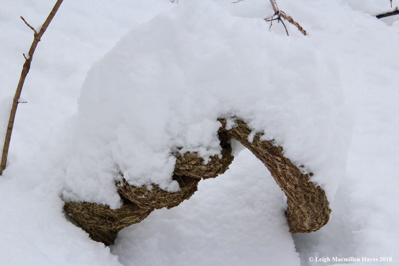 p1-snow on bittersweet