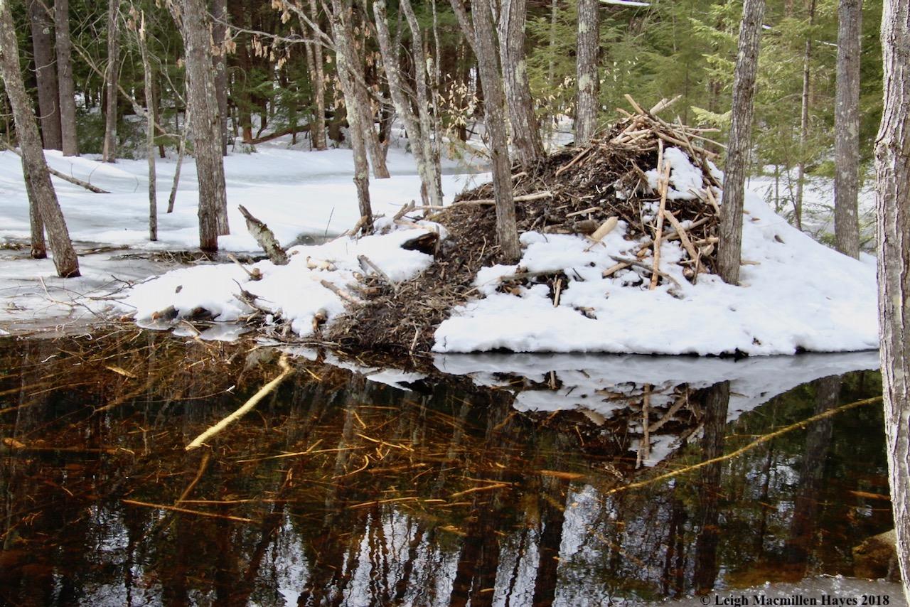 p25-lodge and dinner raft below water