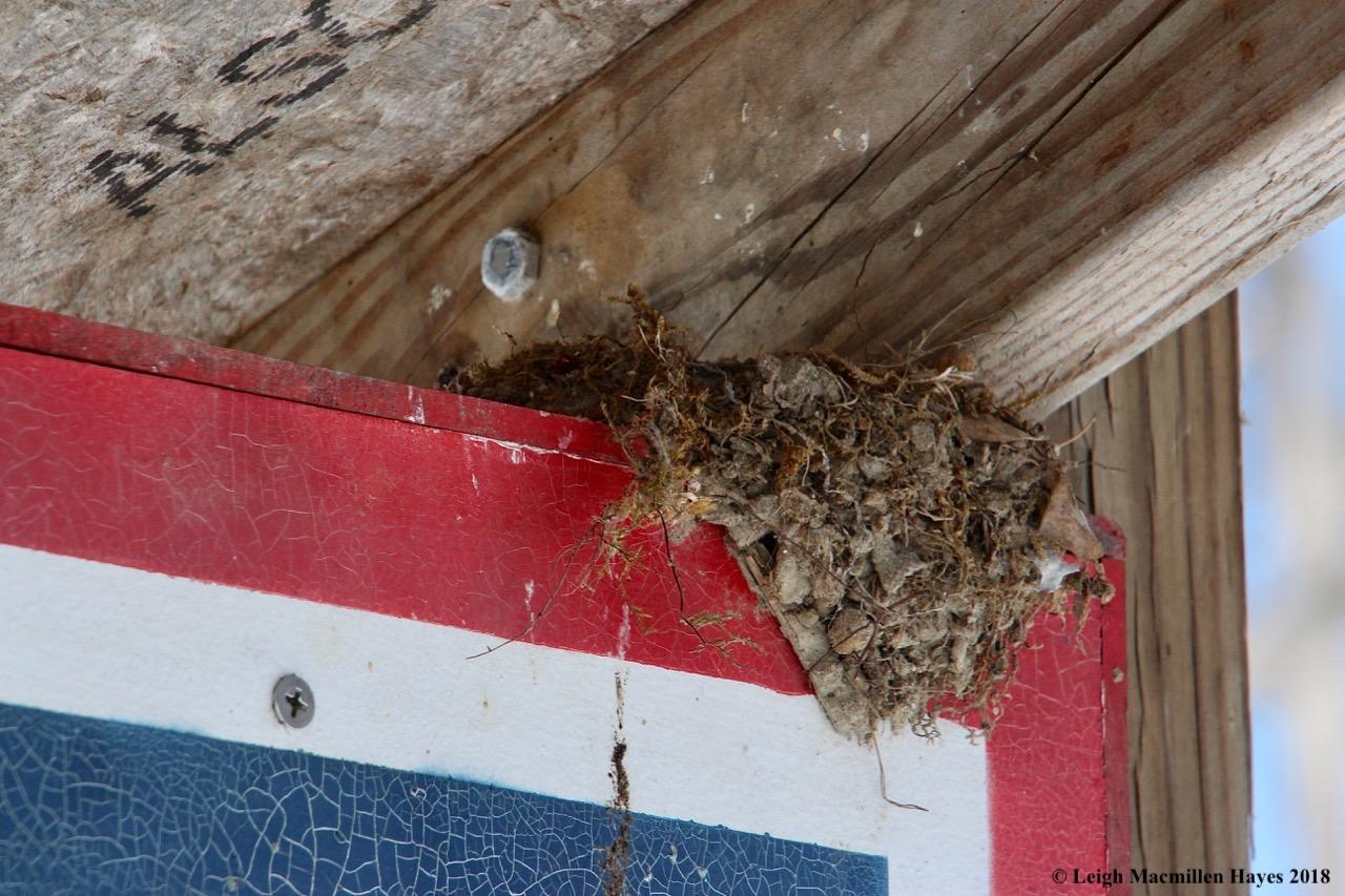 s10-phoebe nest