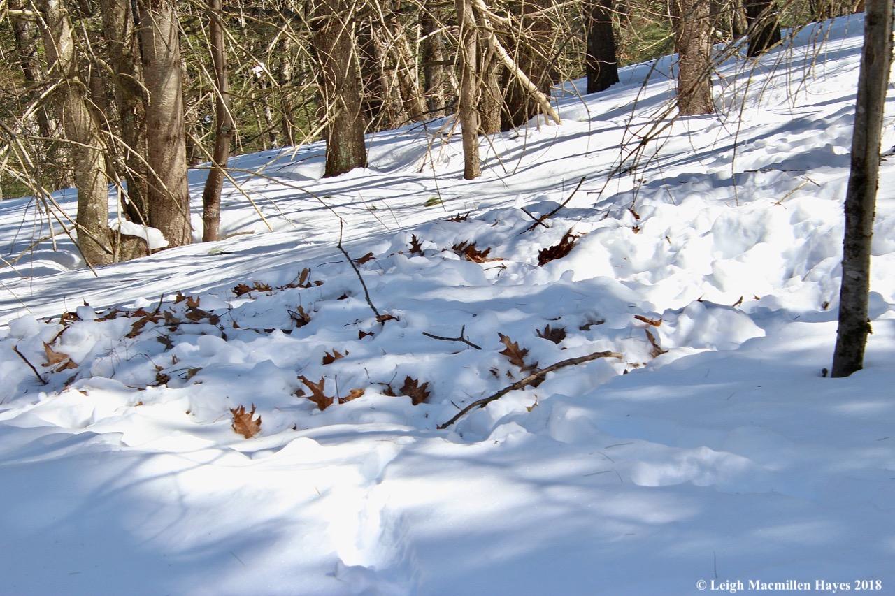 s11-deer feeding site