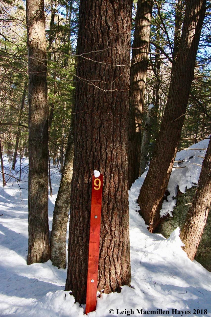 s29-pine tree?