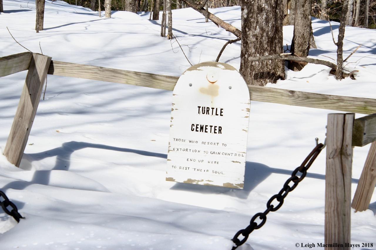 s8-Turtle cemetery