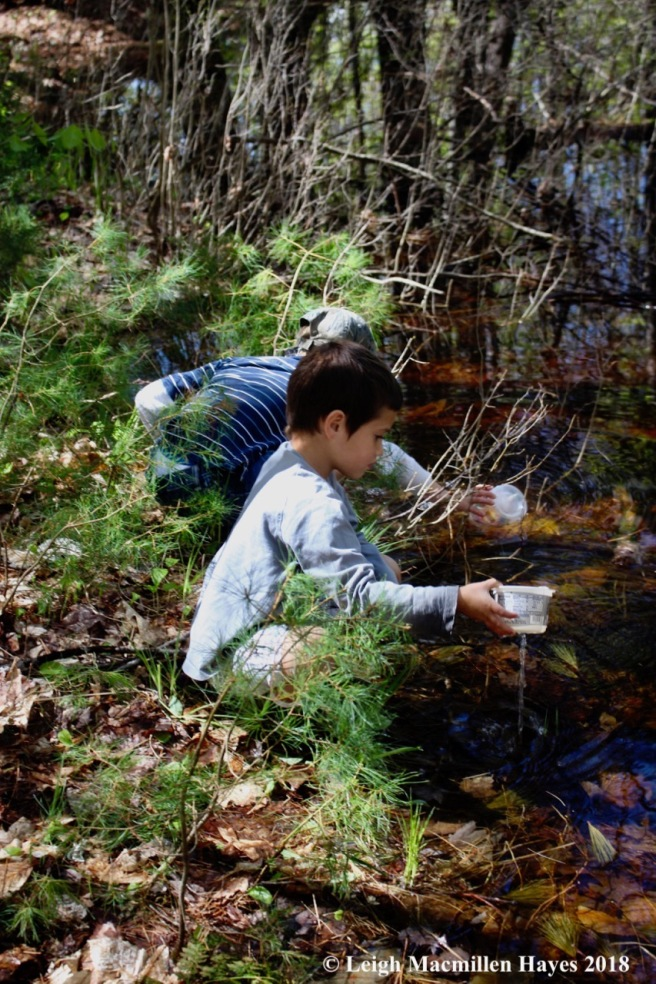 w-pond dipping